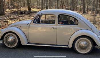 VW Bobbel Oval full